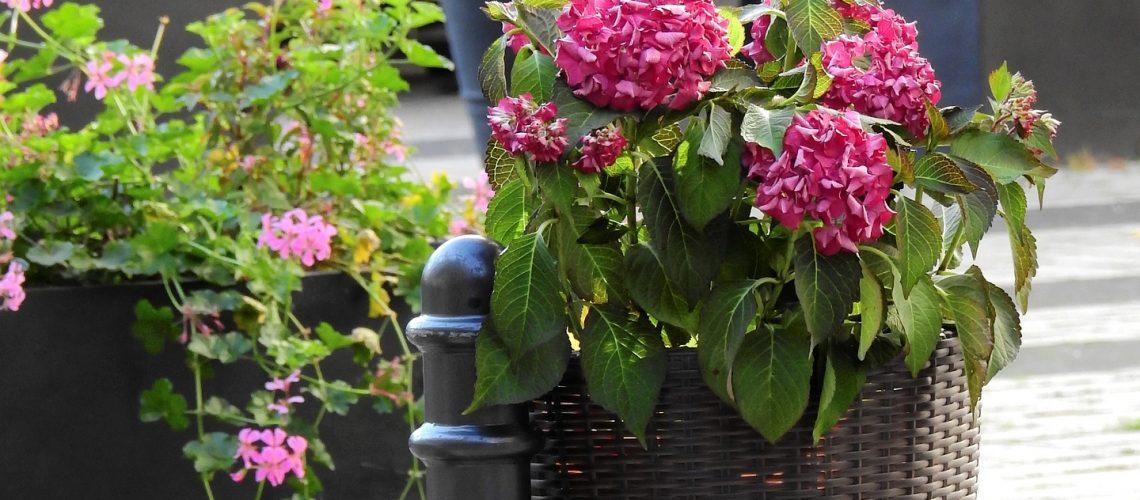 flowers-1733075_1920